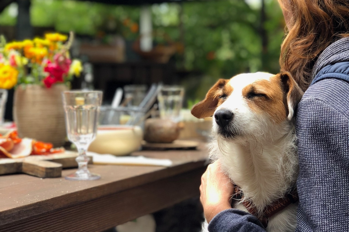 27 Dog Friendly Restaurants In Durban